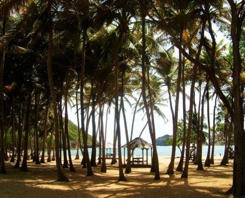 vacanze in barca a vela ai caraibi con skipper guadalupa palme