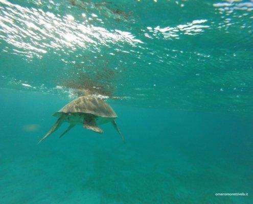 vacanze in barca a vela ai caraibi con skipper grenadine tartarughe