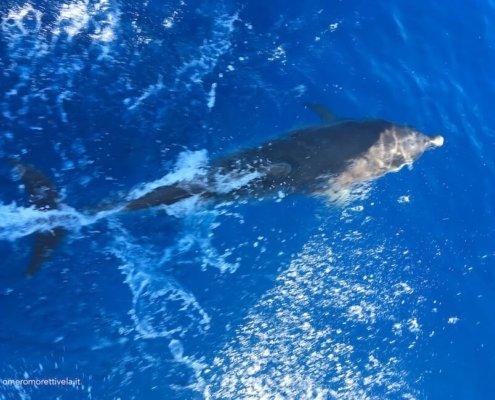 vacanze in barca a vela eolie delfini